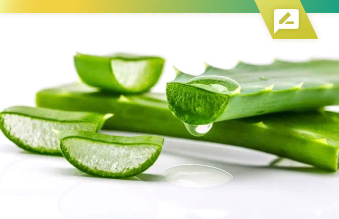 Best Aloe Vera Supplements 2020